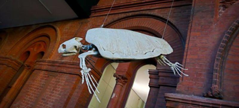 Turtle skeleton in Museum of Southern Australia