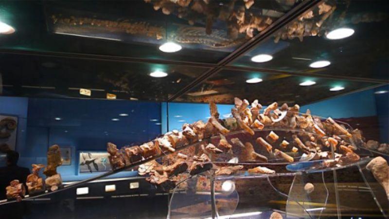 Opalised pleiosaur