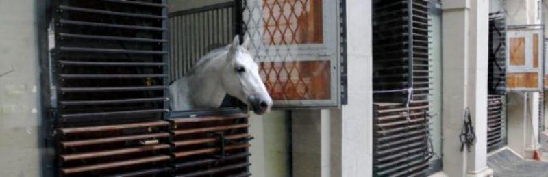 Spanish School horse-head
