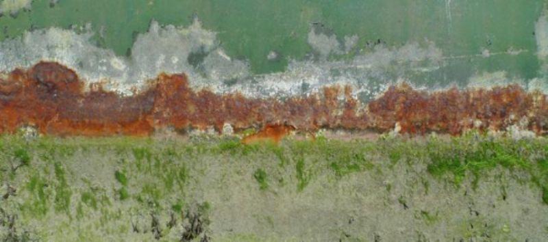 Rust in Itchenor