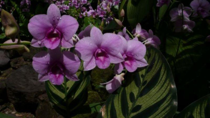 Botanical Gardens 3