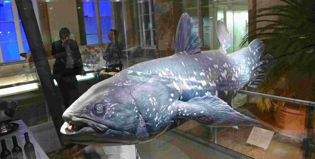 JE PE and coelacanth 2