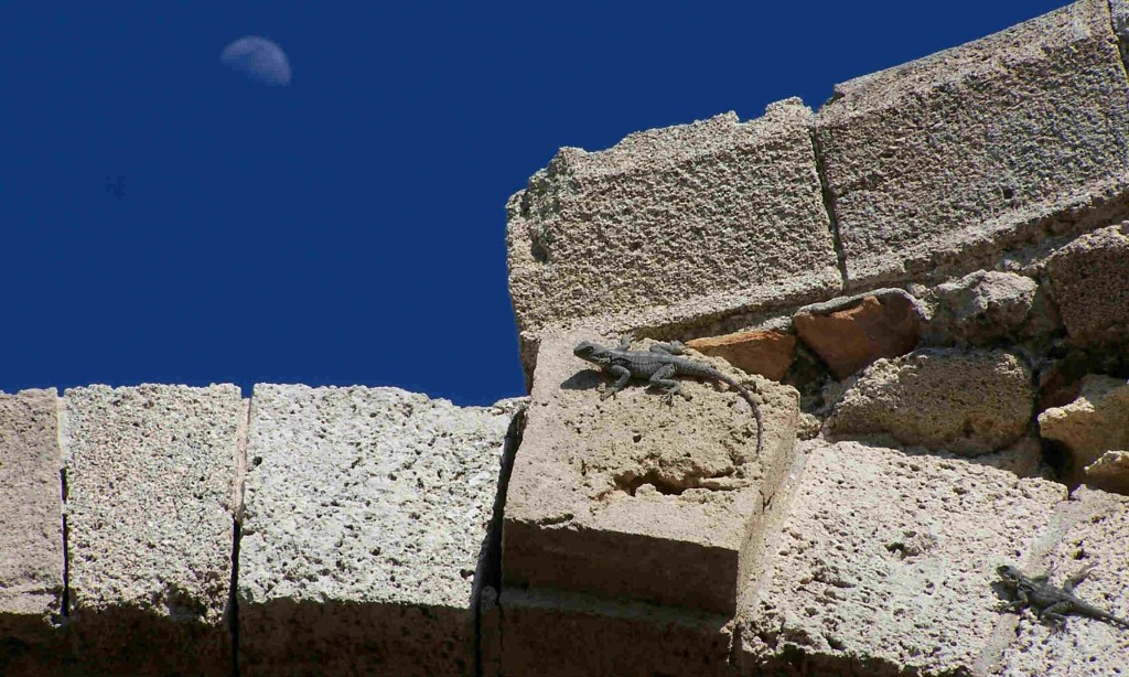 Basillica lizards and Moon 2