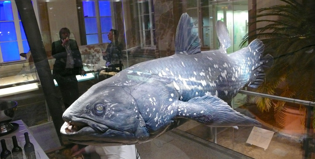 PE International coelacanth