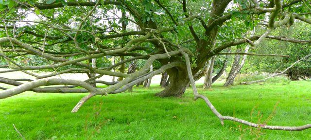 NN5trees