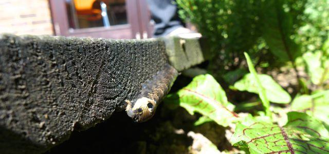 SH2 caterpillar