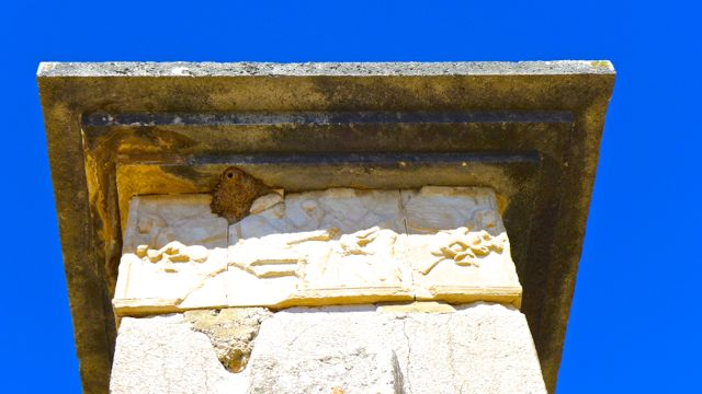 Nest under top of a Xanthos tomb